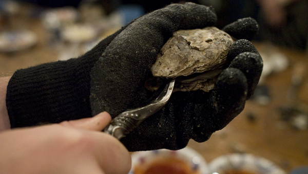 FILE PHOTO   DAILY NEWS AW, SHUCKS: Supporters of Bath High School Preservation, and oyster lovers, will gather Saturday at the Selby Farm Shop for the organization's annual oyster roast.