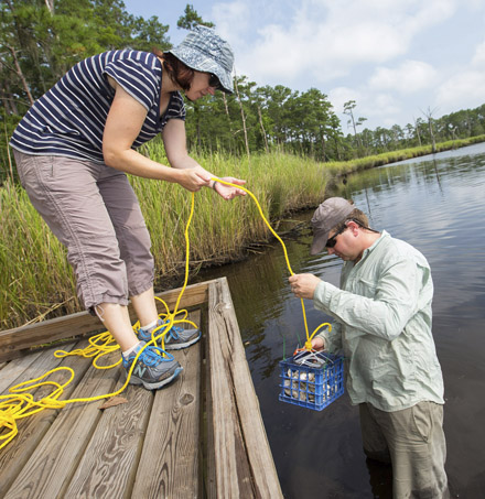 EAST CAROLINA UNIVERSITY FISHING FOR AN ANSWER: April Blakeslee and Christopher Moore, a graduate Biology student at ECU, set out habitats in the Pamlico River to draw mud crabs in for research.